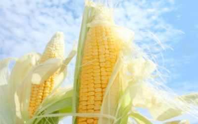 What are the necessary control plans for storing corn in a metal silo?