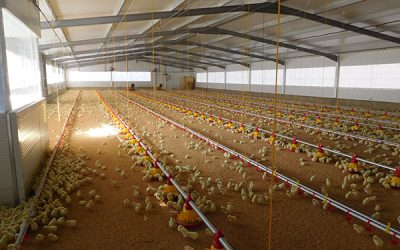 The Silos Córdoba Group develops an innovative system for the complete construction of chicken farms