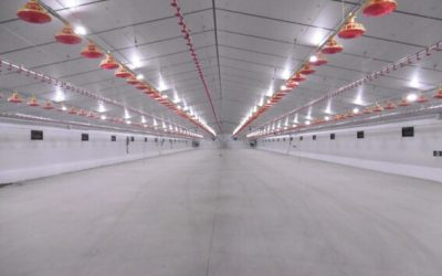 Poultry farm extension in El Viso, Spain